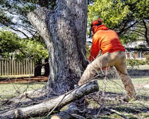 Tree Removal Services in Phoenix AZ