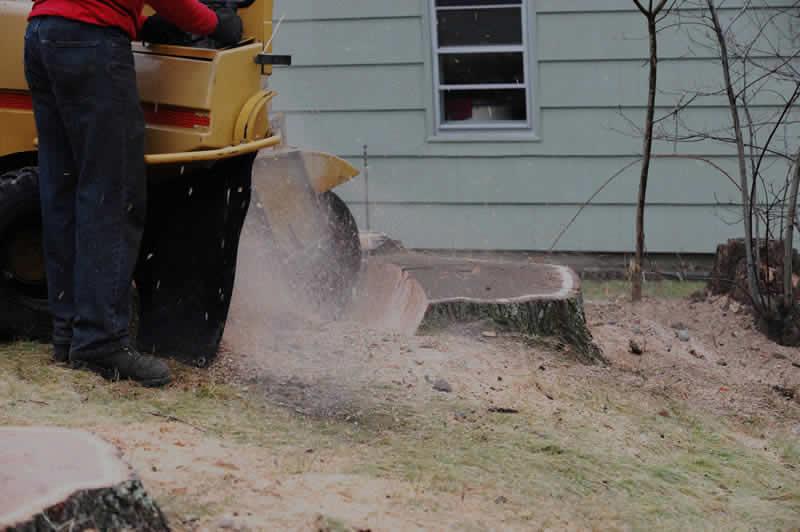 Tree Stump Removal in Phoenix