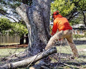 Tree Removal Services in Casa Grande AZ