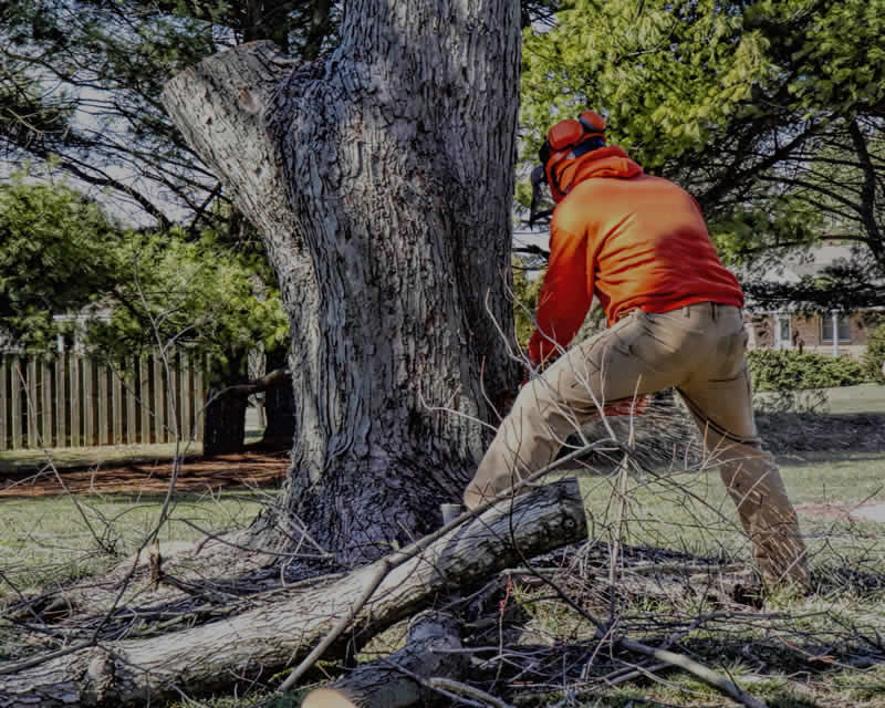 Tree Removal Services in Phoenix